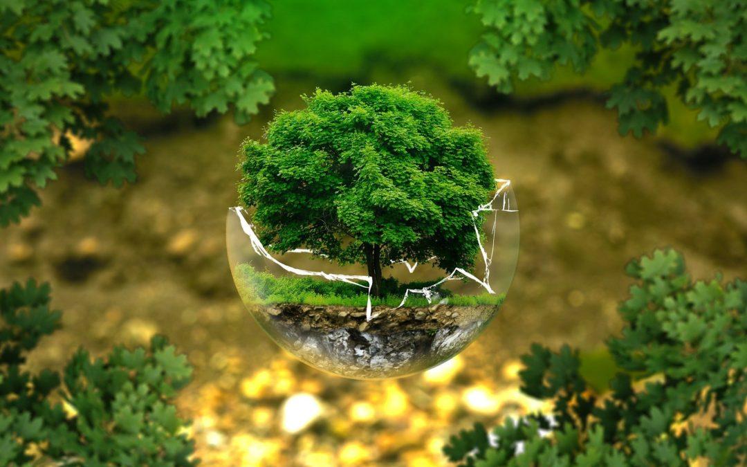 """V EU se poprvé koná každoroční """"Den ekologické produkce"""""""